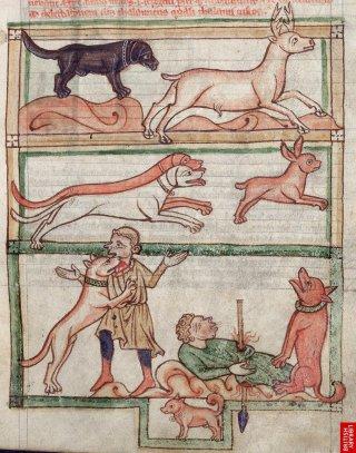 Bestiaire anglais du 13ème. Les différentes qualités du chien, y compris la fidélité au maître mort!!