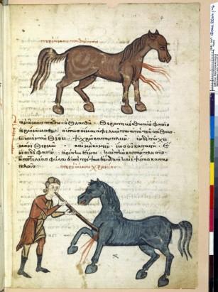 Traité d' hippiatrie du 14ème. ( ce traité, comme les autres comporte plusieurs dizaines de pages), ici, les douleurs à l'épaule. On constate dans ces manuscrits, un certain naturalisme, absent des représentation sacrées.