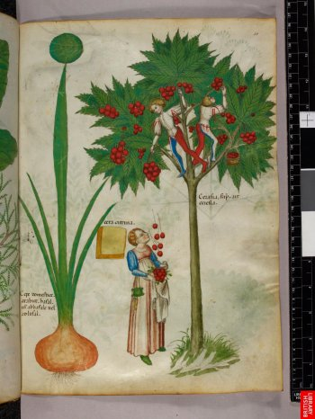 15 , herbier (10)