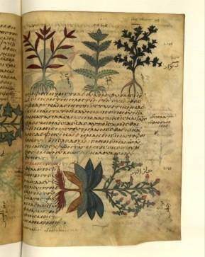 """le type même du manuscrit de besace est le """"Dioscoride"""", déjà au 8ème siècle, ici, au Sinaï. D'après des textes grecs. Ces """"dioscorides"""" seront les herbiers les plus répandus. La mise en page est toujours fonction de la nature de la plante, qui échappe toujours au cadre et est présentée de manière complexe, avec contexte, pouvoirs et légendes aférentes."""