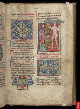 """13eme, Manuscrit de """"besace"""" typiqued'un genre associant les cadres précieux, les lettrines soignées, les figures observées."""