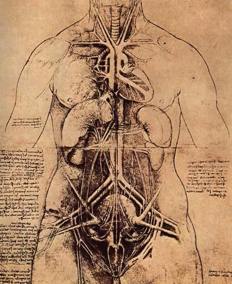 Leonardo Da Vinci, anatomie de torse féminin ; Duchamp reprend cette vision du corps contenant-origine.